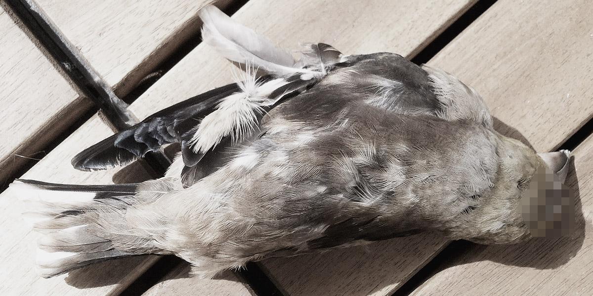toter vogel - foto: bernhard jenny