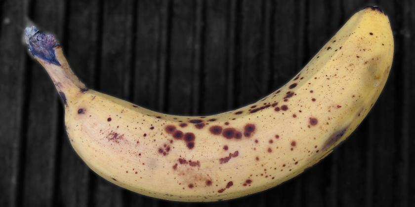 banane_IMG_0839_